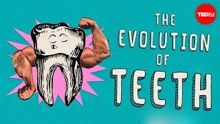 How did teeth evolve? - Peter S. Ungar
