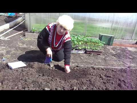 Как измерить температуру почвы