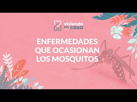 Estas son las enfermedades que ocasionan los mosquitos