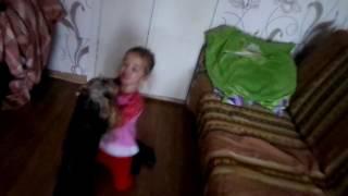 Собака отбирает сапоги у ребенка / A dog takes away knee-boots for a child