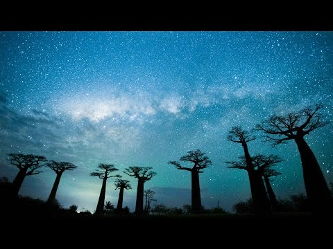 Tentree Madagascar