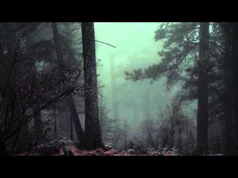 Scary Forest   Royalty Free   Ambience & Sound Effects