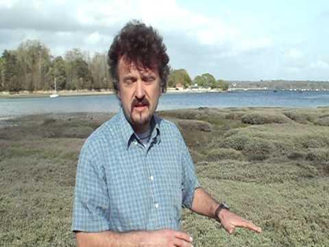 Coastal Systems: Estuaries 2