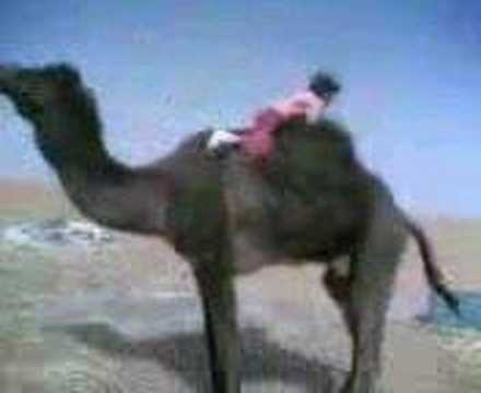bedwin girl getting on a camel