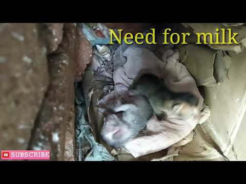 Newly Born Kittens /Need for milk/Mama Cats gone/ Kittens crying for Mama cats/ Cat Eye