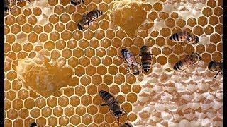 Մեղր, հատապտուղներ ու ջազ Տավուշում