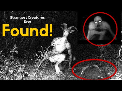 Strangest Creatures Ever Encountered