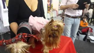 Машинки для стрижки собак. Мастер класс от Loial Moldova (ч.2)