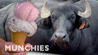 Farm to Cone | The Ice Cream Show