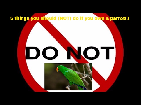 5 things you should (NOT) do if you own a parrot!!!!!!
