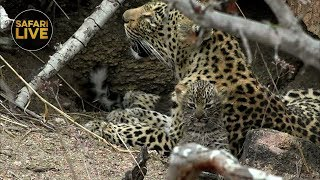 Safarilive Sunset Safari 9, November 2019