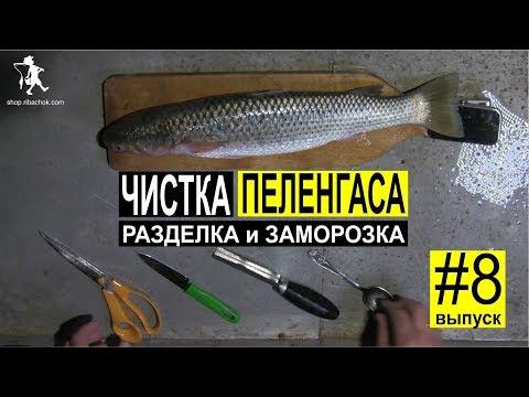 Как чистить, разделывать и заморозить рыбу пеленгас в домашних условиях. Выпуск #8