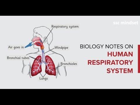 जीवविज्ञान Biology Crash Course (5/13) : Human Respiratory ...