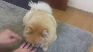 Фокусы Как смотрят фокусы собаки и кошки
