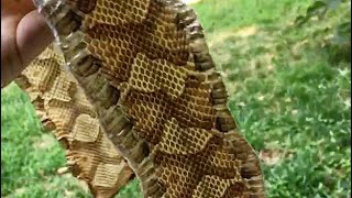 How To Dry and Tan a Snakeskin