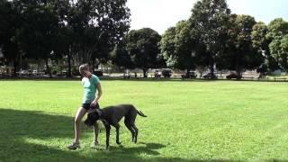 Why Canine Training School