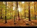 Deep Forest Relaxing Sounds Chillout Mix 2014 mp3