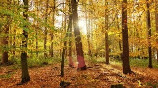 Deep Forest Relaxing Sounds Chillout Mix 2014