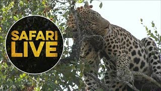 safariLIVE - Sunset Safari - July 5, 2018 thumbnail