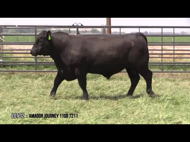 Mid Valley Bull Sale Lot 32