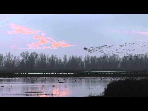 Birdsong.mov