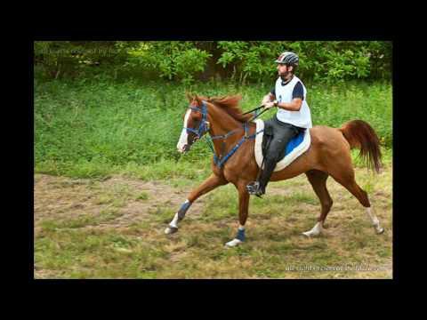"""fazza  """"endurance horse riding  2010"""""""