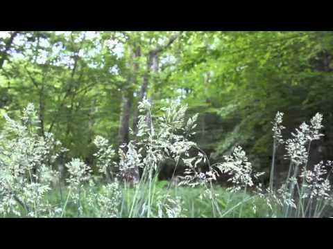Plant Ally Meditation