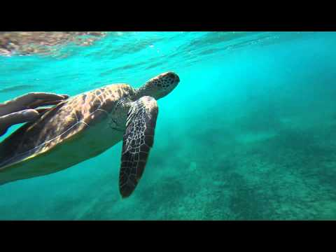 Diving with turtle..