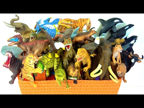 Learn Dinosaurs Wild Animals Sharks Whales Mammoth Zoo What's in the Box?  🌋Volcano - Educational