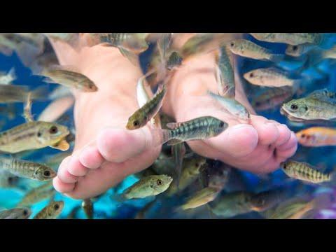 FISH THERAPY For Feet / Terapi Ikan Kecil GARRA RUFA Doctor Fish [HD]