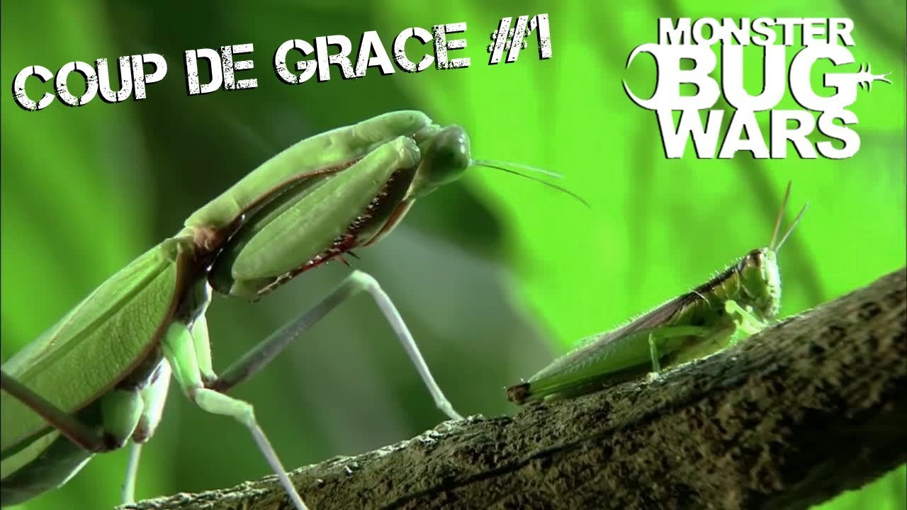 MONSTER BUG WARS | Coup De Grace Collection #1