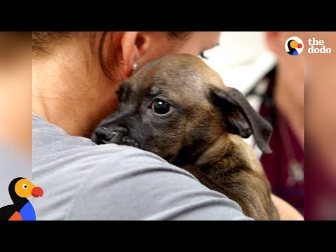 Woman Rescues Puppy From Puerto Rico After Hurricane | The Dodo