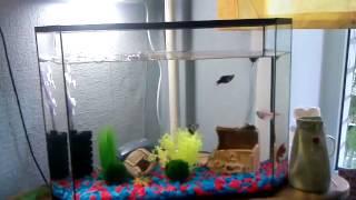 Начинающим аквариумистам