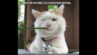 Приколы с котами   ТОПовая подборка Смешные Коты под музыку