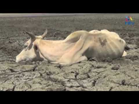 The drought crisis: 1.3 million Kenyans in need of food aid