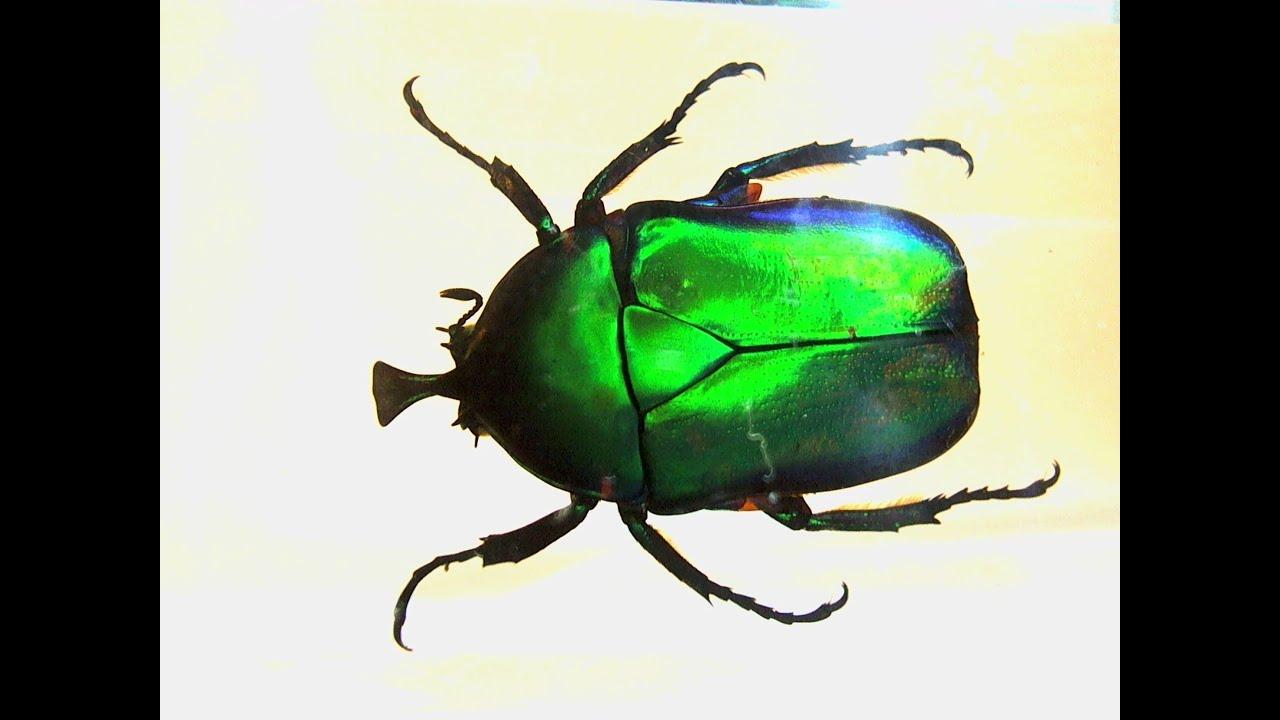 настоящие насекомые и их знакомые 2016