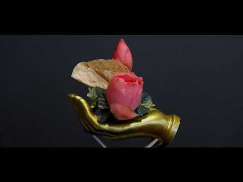 cách cấm hoa sen tại kienthuccuatoi.com