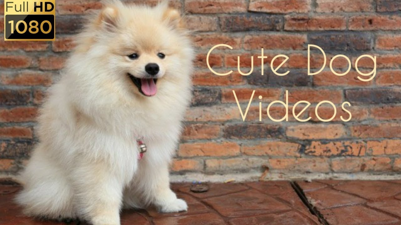 Cute Dog Videos Playing Sleeping Eating Youtube