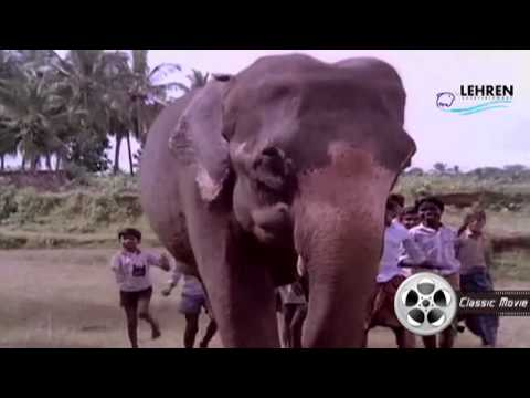 Aanachandam  Gajakesariyogam  Malayalam Movie Song