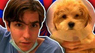 Dog Plastic Surgeon Dr. K-90210