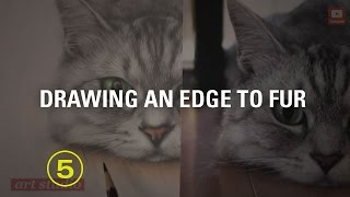 How to Draw a Soft, Natural Edge to Fur