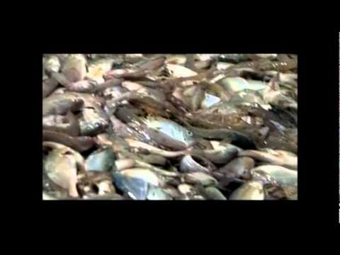 Varnamtown NC, Shrimping