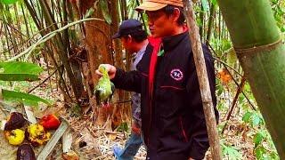 Download Video 2016 Birds Hunting expedition. Laij hav zoov tua Nquab Ntsuab (HD) MP3 3GP MP4