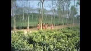 Tours-TV.com: Tea plantations in Bangladesh