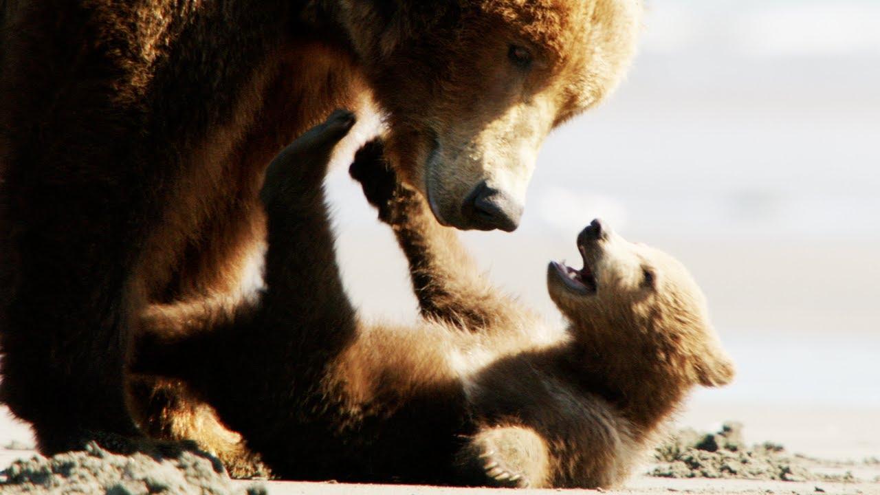 disney movie bears