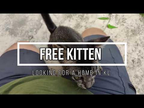 Kitten Looking To Be Adopted 🐱 - Kuala Lumpur, Malaysia!