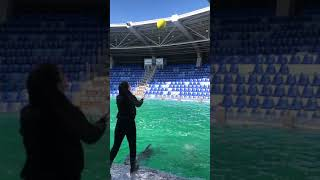 Dolphin lover's don't miss this video | Cute animals | Dolphin cute lovely video |