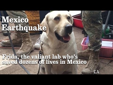hqdefault - Rescue Dog in Mexico City - Photos Unlimited