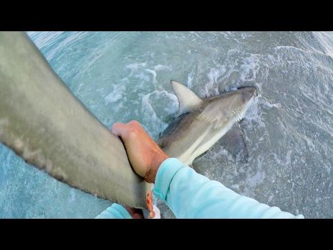First Blacktip Shark Of 2017