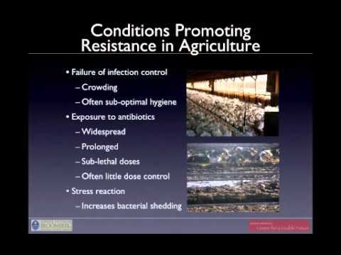 2011-06-28 Health and environmental consequences of industrial food animal production